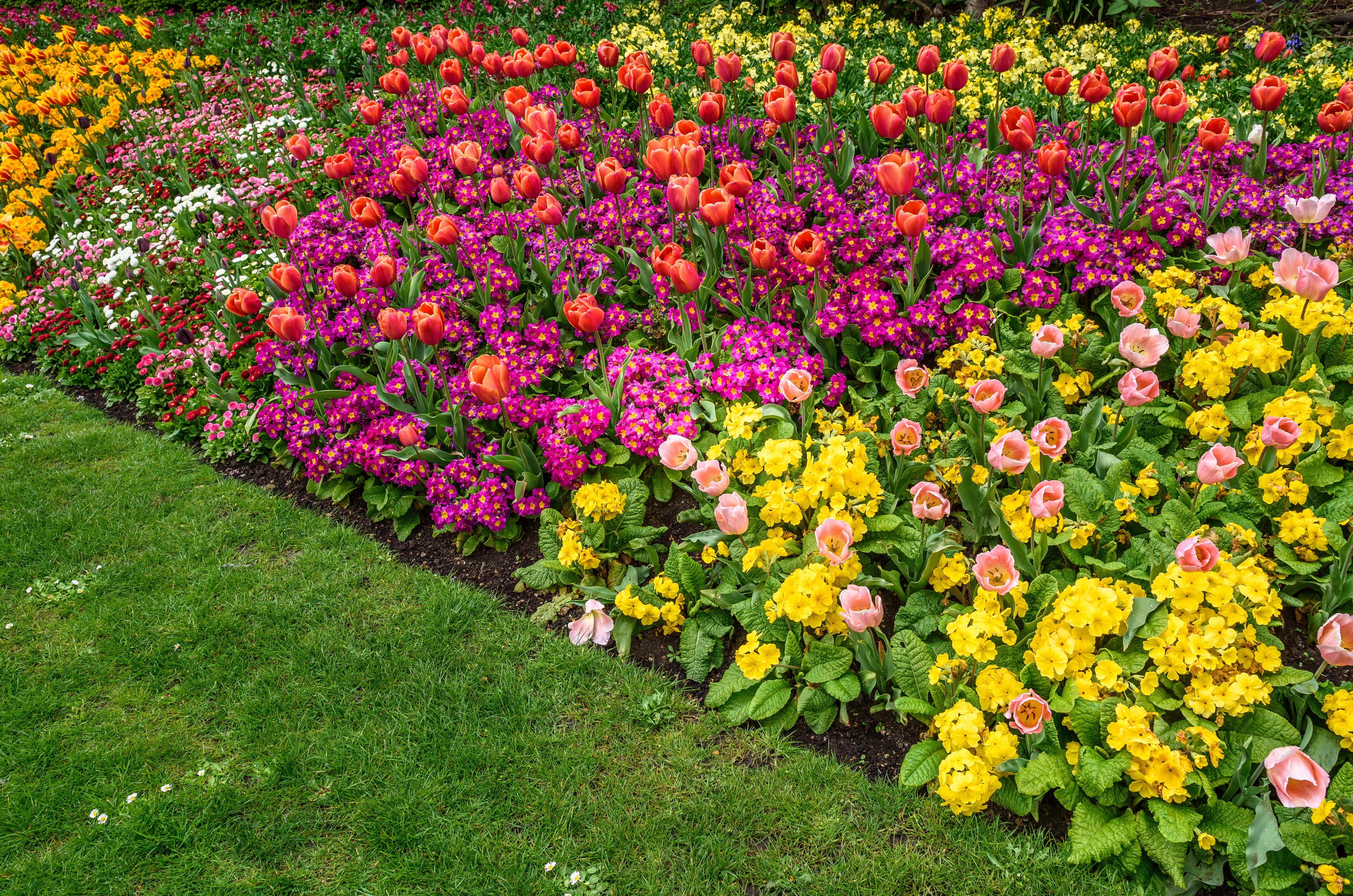 Nachtigall_leistungen_Pflege_der_Rabatte_Blumenbeet